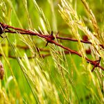 Photo of barbed wire in wheat field