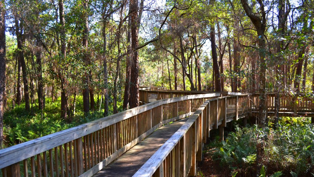 A nature walk in the middle of lush greenery