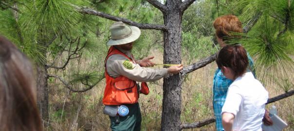 people measuring width of a tree