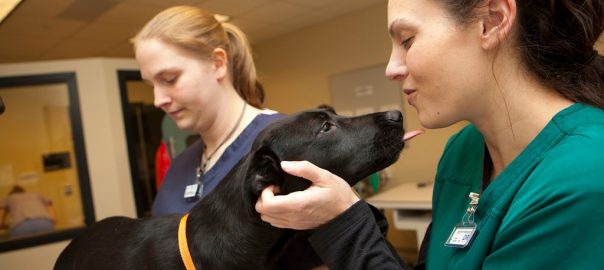 Girl with a dog for vet tech