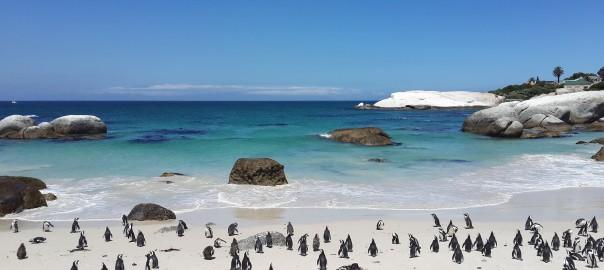 south-africa-boulders-beach-penguins