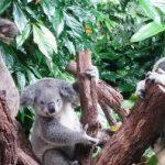 Australia Vet Tech Study Abroad