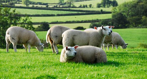 Study Abroad Animal Science Program In Ireland and Scotland!