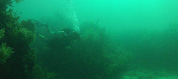 Photo of scuba diver on Florida Keys dive trip